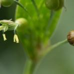 「自然の中に生きる虫と花 虫嫌い厳禁のブログ」