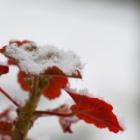 『【写真日記#3】2018年上四半期 冬の茨城 雪・野鳥・愛猫 | 【Photo Diary#3】Snow, Wildbirds & Our Cat in Ibaraki in the First Quarter of 2018』の画像