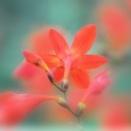 『夏の花』と『孫娘成長の記録』