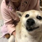 柴犬カンチの足跡日記