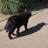 『【猫又】ボス猫ジロの復讐「猫好きな人は見ない方がいい」』の画像