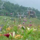 NO.3 2007.08.04(土)  清里サンメドウズとユリフェアのサムネイル