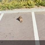 『またGoogleストリートビューの愛犬 2』の画像