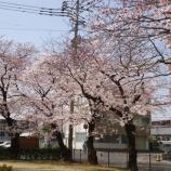 『【ながさき】春…桜満開 ♫』の画像