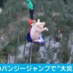 【画像】開業祝いのバンジージャンプでブタがジャンプ →非難殺到「豚が何か悪いことでもしたのか」