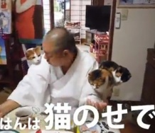 『長楽寺住職と猫の暮らしぶりのニュース動画に映りまくる加賀楓wwwwwwwwww』の画像