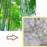 『竹からも最先端の新素材 ナノセルロースは竹害問題を救うか?』の画像