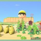 『麦わらの帽子の君が』の画像