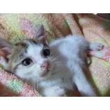 『まさかまさかのネコ生活』の画像
