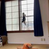 『猫ちゃんの脱走防止窓』の画像