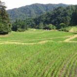 『田植えから一ヶ月…ぼちぼち戦場へ!』の画像