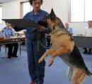 震える男児、深夜3時の発見 嘱託警察犬シータに感謝状 宮崎南署