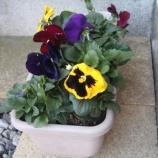 『玄関まわりが殺風景なので花を置いてみました』の画像