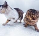 凍てつく大地で生きる野良猫