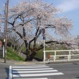 『わが家の桜10』の画像