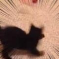 子ネコが「ねこじゃらし」を追いかける。ぶんぶんグルグル♪ → こうなった…