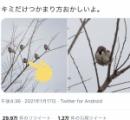 枝にとまるスズメがなんだか変だぞ!「筋トレ中?」「超絶かわゆし」海外にも大反響、162万人が爆笑