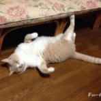 猫日和。キルト日和。