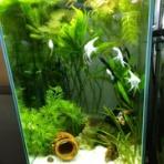 motiのアクアリウム記録(moti_aquarium)