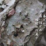 『春どんこ』の画像