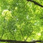 『新緑』の画像