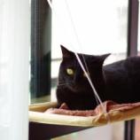 『窓用ニャンモック(ハンモック)買ってみた(ΦωΦ)ニャー』の画像