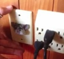 【画像】どうしてこうなった? 電源プラグ挿し込み口にカンガルーネズミが挿さる