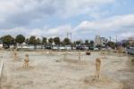 府道736号線沿いに『納豆』みたいなんがいっぱい植わってる!~サークルKがあったあたり、ガソリンスタンド前~