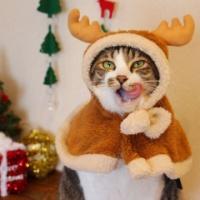 3COINS(スリコ)で愛猫愛犬をサンタ、トナカイ、ツリー、雪だるまにかわいく変身♡