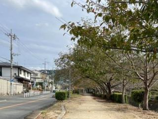 傍示川沿いの並木道をてくてく散歩して秋を探してみた!〜紅葉はまだもうちょっと先みたい〜
