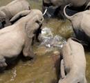 「川で産気づいた!」 ゾウの出産 仲間がワニから守る/南アフリカ