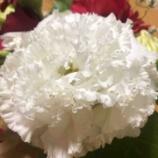 『花は○○を作る🌸』の画像