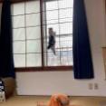 猫ちゃんの脱走防止窓