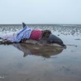 『道を間違えてイルカの命を助ける』の画像