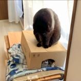 『きょうのいちまい・箱取り合戦』の画像