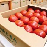 『岡田農産さんのトマトで「トマトと紫蘇とモッツアレラの冷製パスタ」』の画像