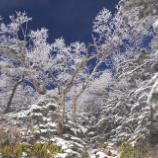 『八ヶ岳の森』の画像