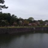 『桜巡り』の画像