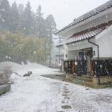 『季節外れの雪になりました!』の画像