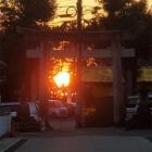『参道一の鳥居に沈む夕日』の画像