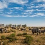 『世界最大のサイ牧場』の画像