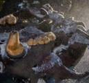 メキシコの水中洞窟で氷河期の地球史上最大のクマの骨が発見される これまでで最高の状態 南米以外では初
