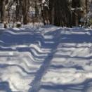 雪の径・冬の木・ノリウツギ花殻
