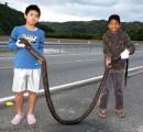 体長3メートル 沖縄の海にオナガウツボ現る 小学生が捕獲