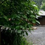 『JAL×はんつ遠藤コラボ企画【屋久島編】3日め・茶屋(やまがら屋)』の画像