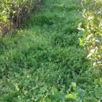 日本一の抹茶の里 緑茶の龍香園