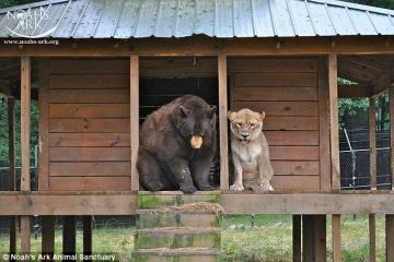 ライオンと犬って一緒に飼える?ペロペロしてるからいいよね?