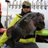 『2月29日 釣果 スーパーライトジギング SLJ いろいろな魚種の数釣りが楽しめましたよ♬』の画像