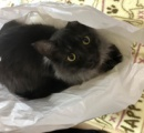 我が家の猫が1歳半になった