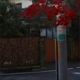 『世田谷の紅葉』の画像